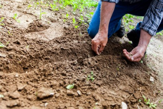 renovatie van je tuin